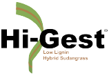 Hi-Gest Hybrid Sudangrass