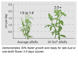 Hi-Ton alfalfa growth comparison chart