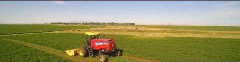 Swathing Alfalfa