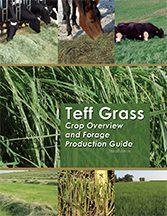 Teff Grass Management Guide