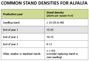 Common Stand Densities for Alfalfa