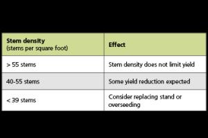 Impact of Stem Density on Yield Potential for Alfalfa