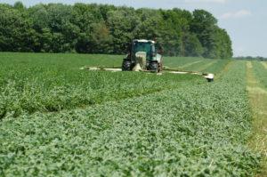 Cutting Hi-Gest 360 Alfalfa