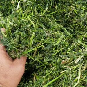 Hi-Gest Alfalfa Silage