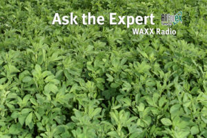 Ask The Alfalfa Expert - High Yielding Alfalfa
