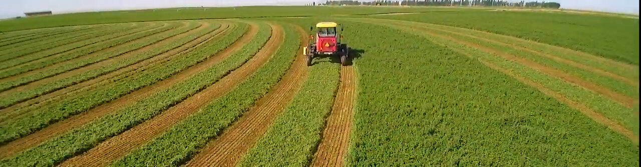 Alforex Seeds Alfalfa and Forage Excellence