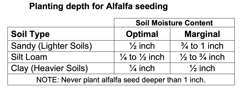 Planting Depth for Alfalfa Seedings