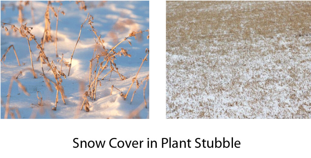 Snow cover with alfalfa stubble for winter protection from winterkill